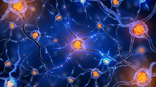 重生细胞电鞭怎么样